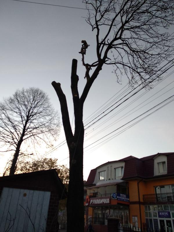 Професійне зрізання дерев!